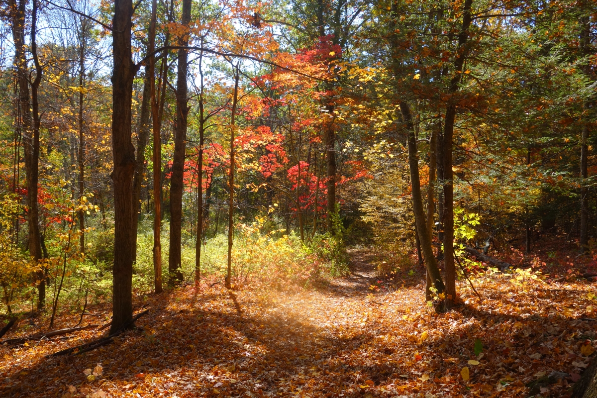 Steep Rock Trail Connecticut Fall 2016-DSC08275