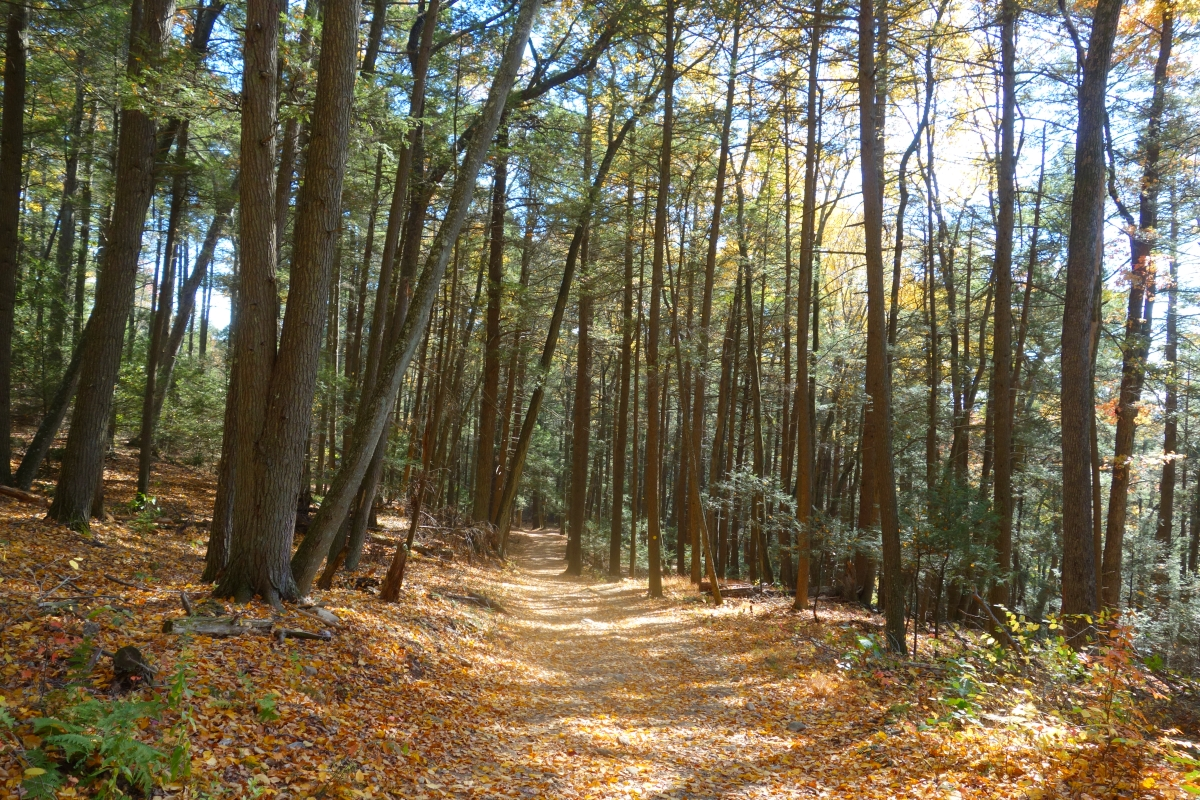 Steep Rock Trail Connecticut Fall 2016-DSC08367