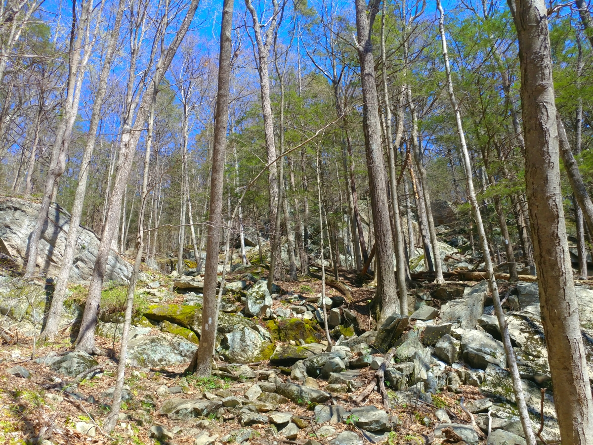 Hiking from River Road to 151139