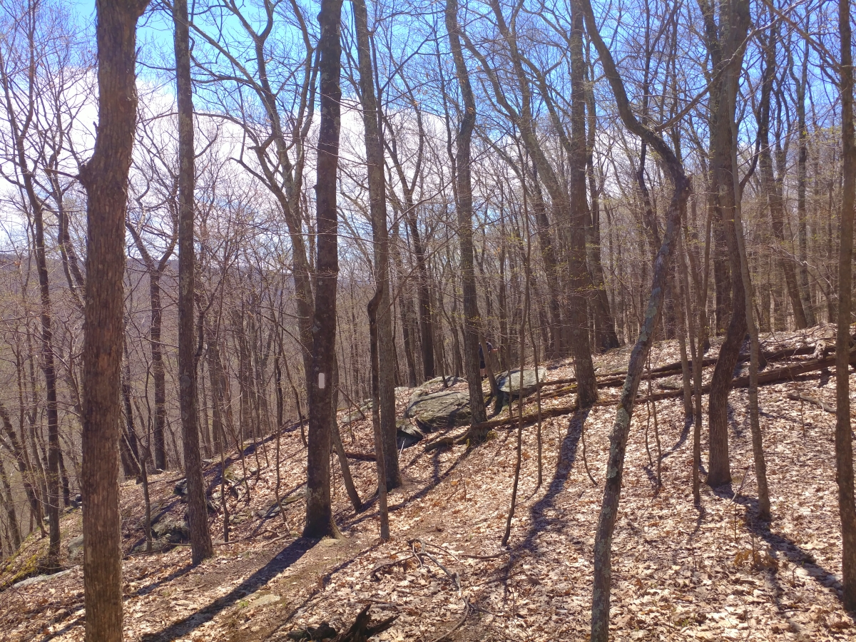 Hiking from River Road to 341134259