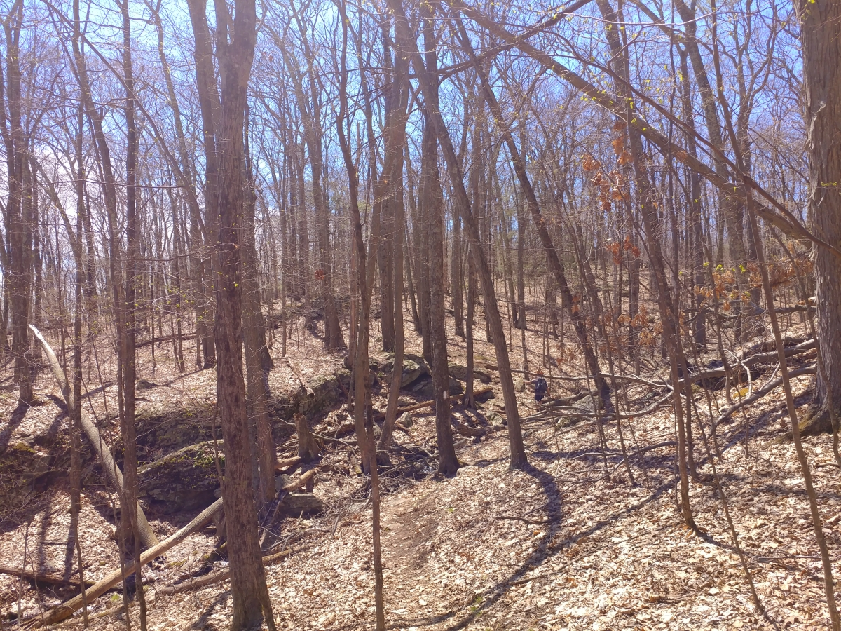 Hiking from River Road to 341134413