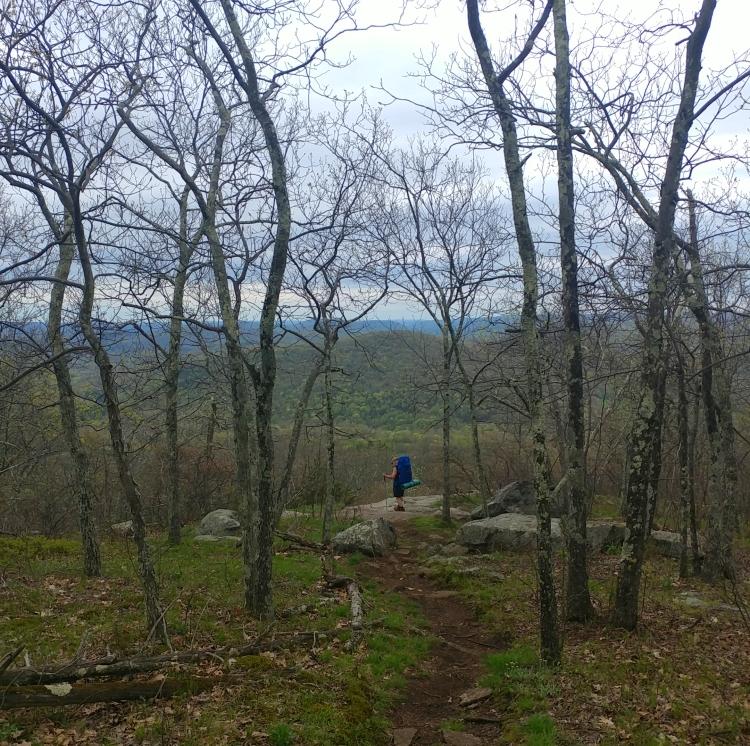 Appalachian Trail 341 to Hoyt Road_133211