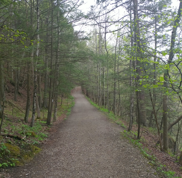 Appalachian Trail 341 to Hoyt Road_152842