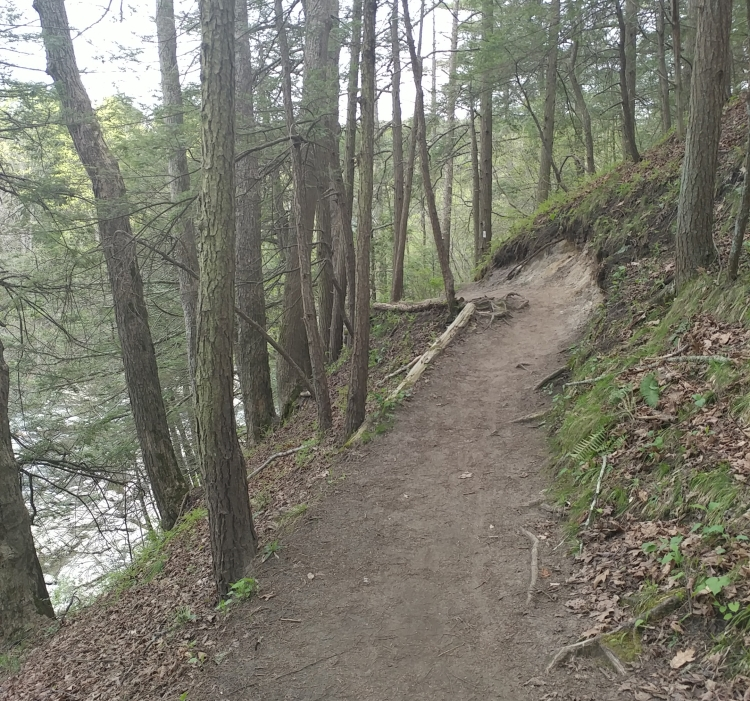 Appalachian Trail 341 to Hoyt Road_153406