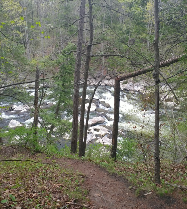 Appalachian Trail 341 to Hoyt Road_153453