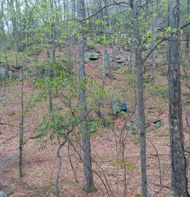 Appalachian Trail 341 to Hoyt_120857