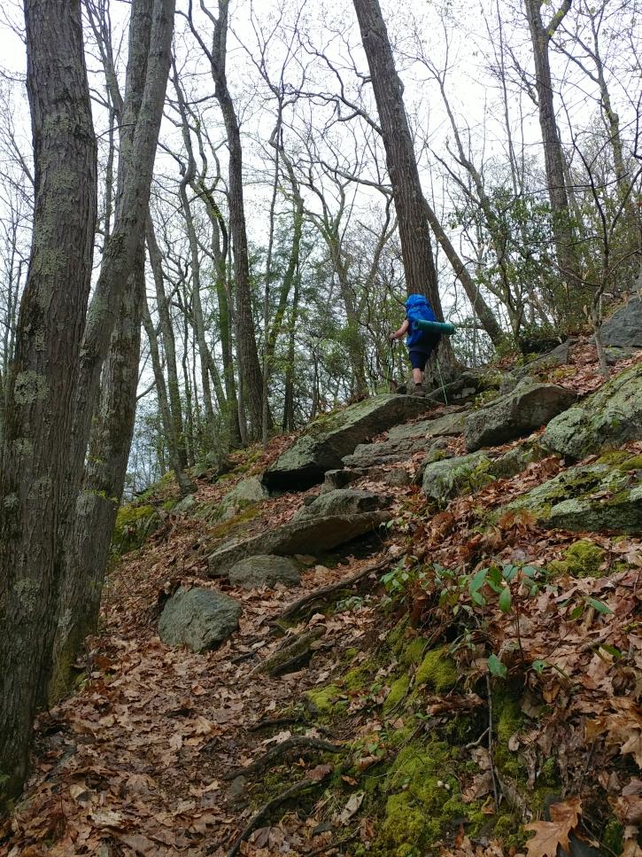Appalachian Trail 341 to Hoyt_121034