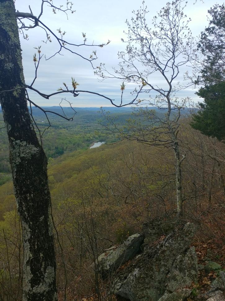 Appalachian Trail 341 to Hoyt_123656