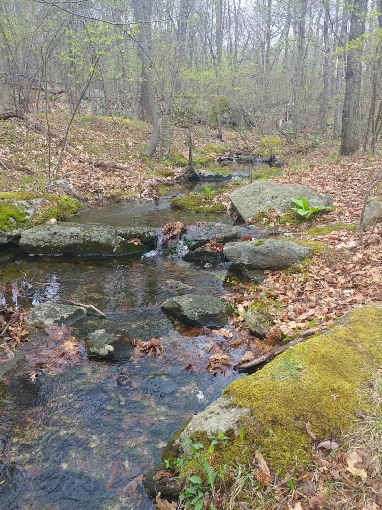Appalachian Trail 341 to Hoyt_124419