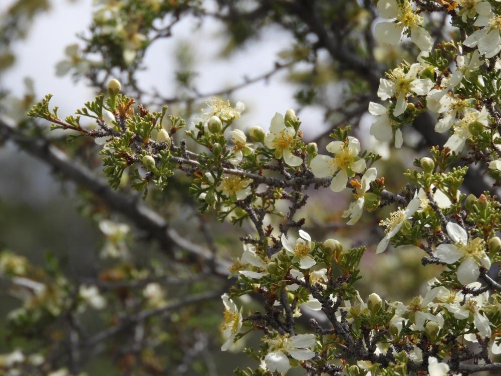 La Madre Spring TrailDSCN3834
