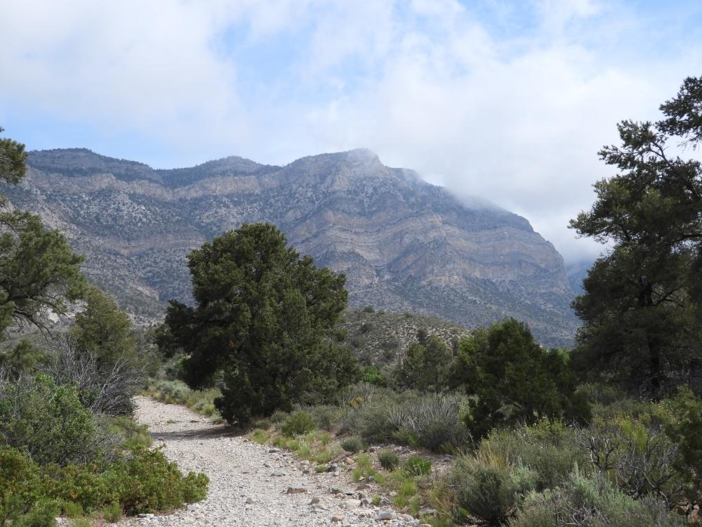 La Madre Spring TrailDSCN3854
